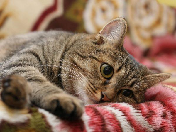 cat 1 301