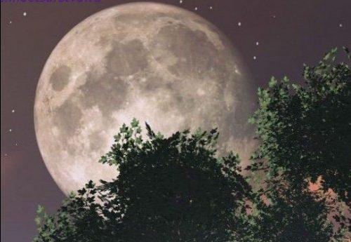 Лунный посевной календарь садоводов и огородников на 2020 год ...