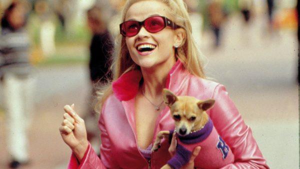 Лучшие собаки для прогулок: Лесси, Хатико, Марли - FoxTime