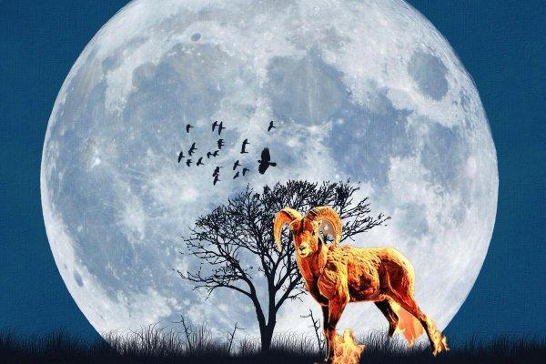 Овно-день: Зодиаку нужно «отлежаться» 9-ого марта дома – астролог