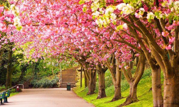 Картинки весна на рабочий стол (50 фото) • Прикольные картинки и позитив