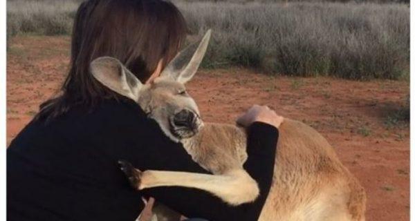 В Австралии люди спасли кенгуру. Теперь он не может перестать с ними обниматься - ВИДЕО