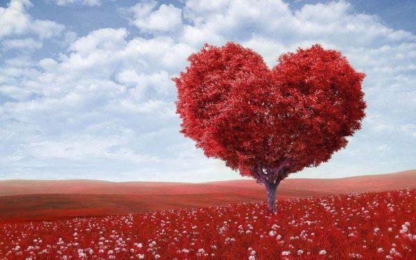 Что говорит наука о любви   Чудеса и Приключения